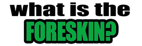What is the foreskin?